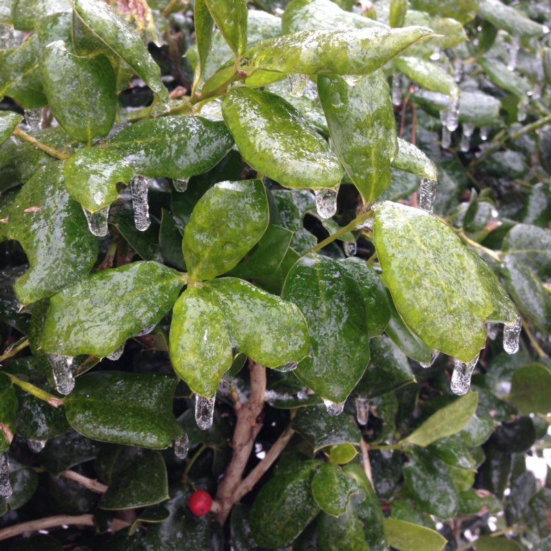 Atlanta Ice and Snow Storm 2014
