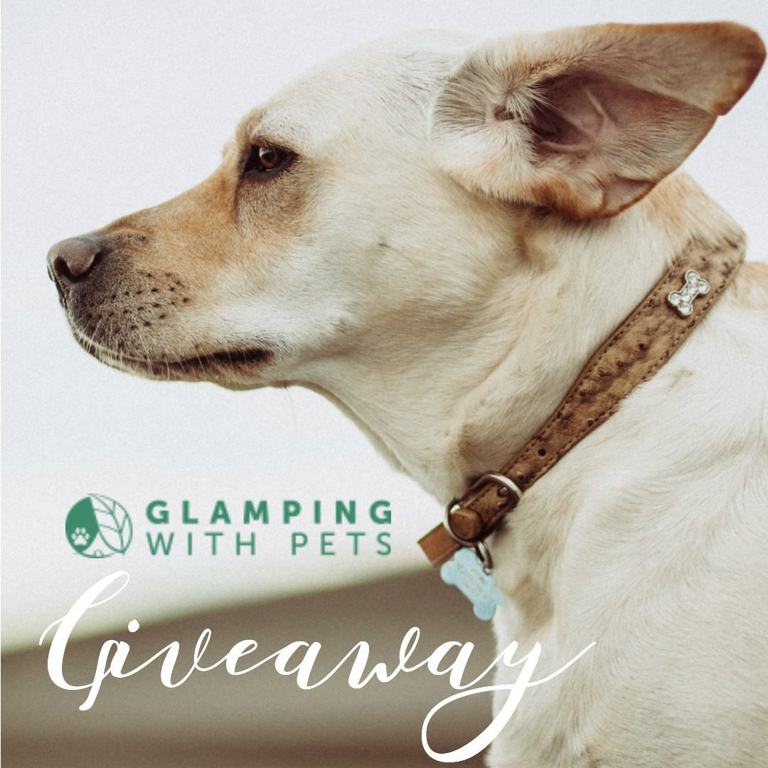 Glamping With Pets | Giveaway