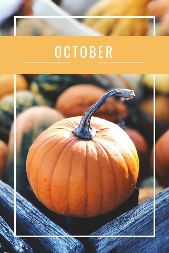 15 Activities To Add To Your Fall Bucket List This Year! #fall #october #leaves #hayride #hauntedhouse #fallideas #falldecor #fallmakeup #fallrecipes